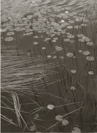 Koichiro Kurita -  'Share', Jams Bay, Quebec, 1992, platinum palladium print,  14 x 20 inches,  Edition 8 and 23 x 34 inches, Edition 2