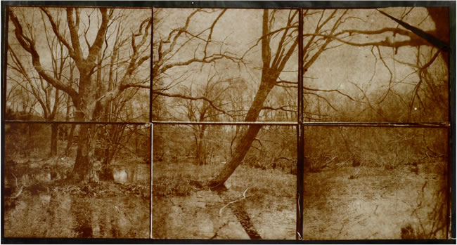 Koichiro Kurita -  'Vernal Equinox',  Arshamomaque Presevation Long Island, NY, 2013, Albumen print  from Talbotype paper negatives,  16 x 30 inches,  triptych, Edition 3, AP 2