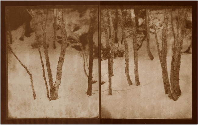 Koichiro Kurita -  'Winter Gathering', Montville, ME, 2013, Albumen print  from Talbotype paper negatives,  10 x 16 inches, Edition 5, AP 2
