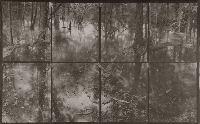 Koichiro Kurita, 'Flood Forest'